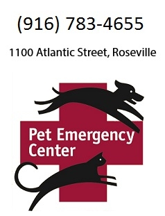 Atlantic Street Veterinary Hospital